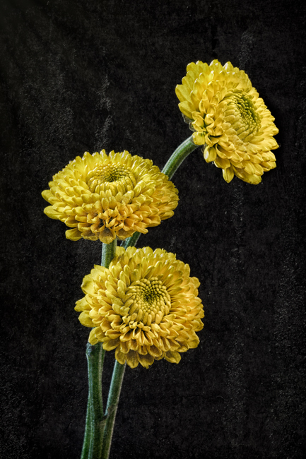Yellow Flowers - Topaz Texture Effects