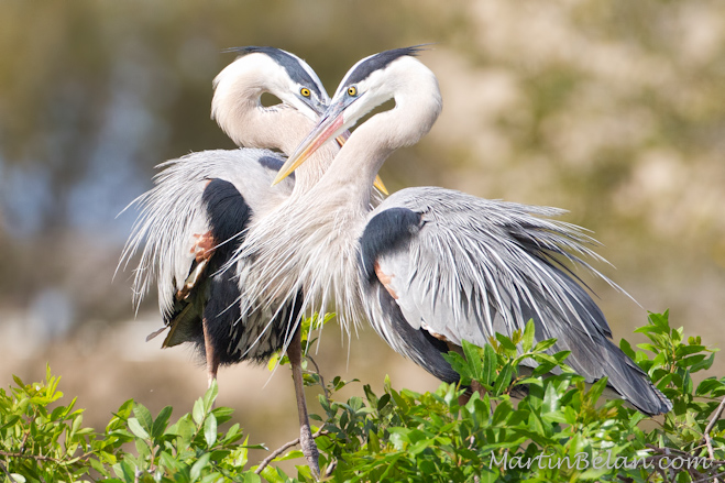 Heart Warming Herons