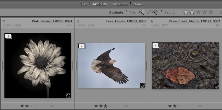 Ranking Photos in Lightroom