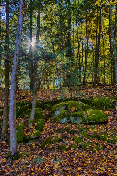 Forest Scene, Shelburne Pond, Vermont