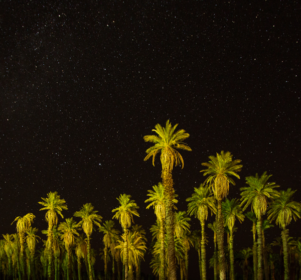 Palm Trees at Night, Furnace Creek Ranch, Death Valley