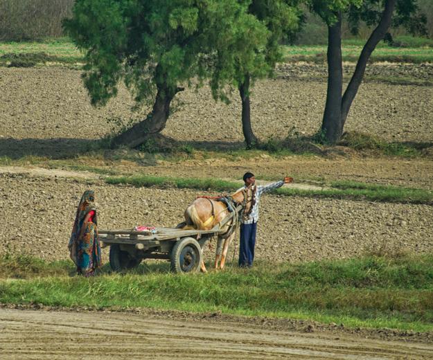 Indian Farm Scene
