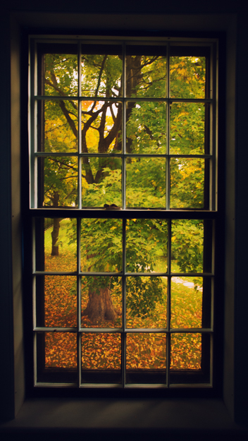 Autumn Outside the Window, Vermont