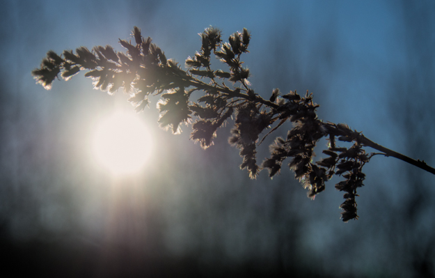 Backlit Winter Branch