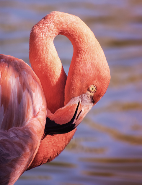 Flamingo at the Ecological Park