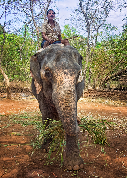 Elephant Rides, Tropical Spice Plantation,  Goa