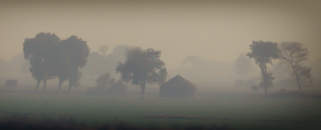 Indian Farm Foggy Sunrise