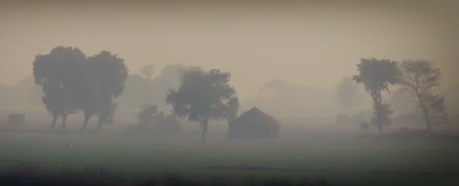 Indian Farm Foggy Sunrise