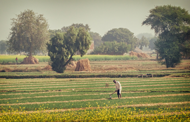 Working the Fields, India