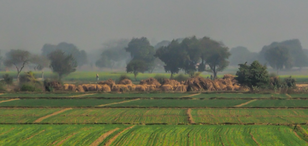 Stacking the Harvest, India