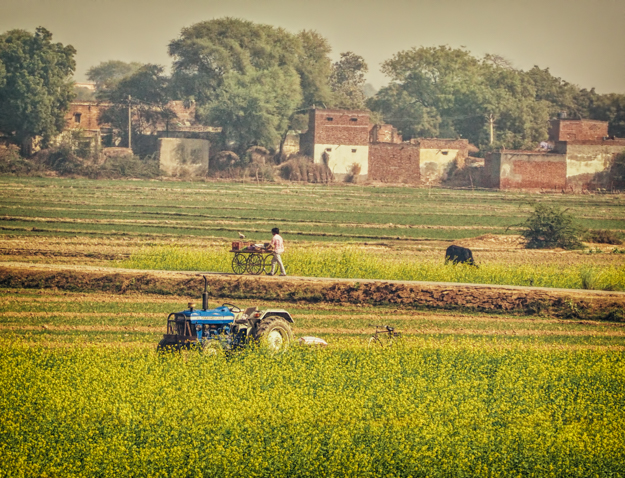 Tractor in the Mustard Fields