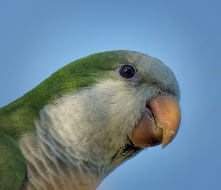 Parrot - Rotary Park, Cape Coral