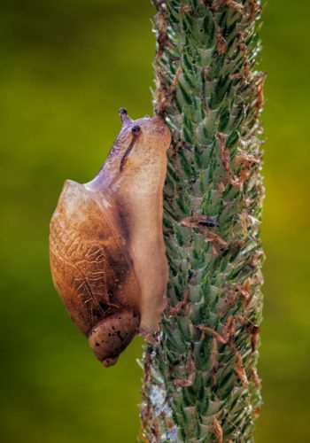 Snail Climbing the Tall Grass
