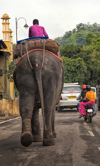 Elephant Taxi Rajasthan, India