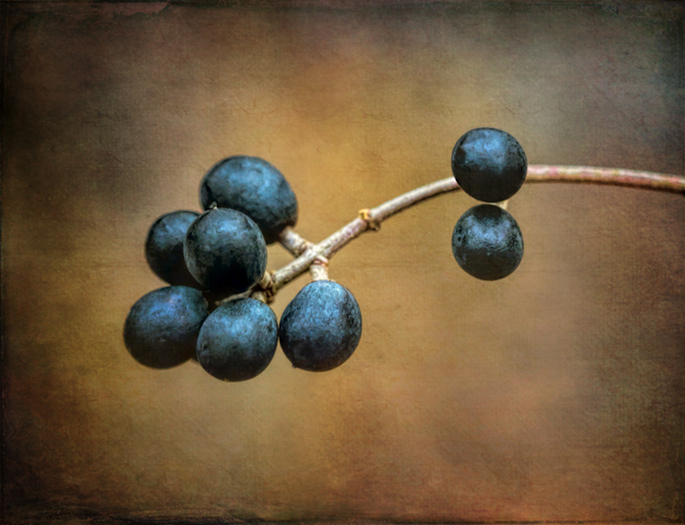 Blue Winter Berries Processed in Topaz Labs Texture Effects
