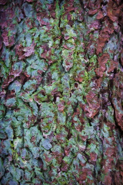 Moss in the Tree Bark Art