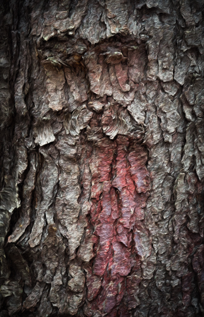 Red Beard Bark