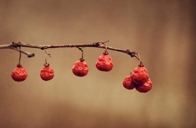 Winter Berries - Topaz Texture Effects - Chamois