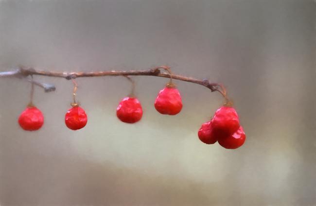 Winter Berries - Topaz Impression Watercolor V