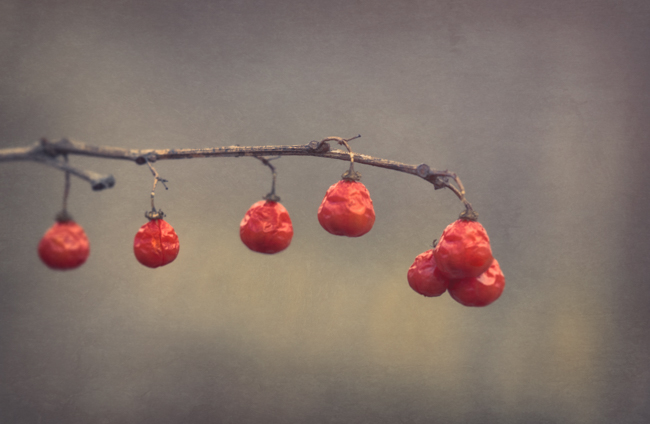 Winter Berries - Topaz Texture Effects - Matte Mountain