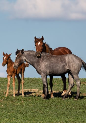 Wild Horse Family Portait