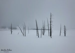 Cold and Snowy Yellowstone