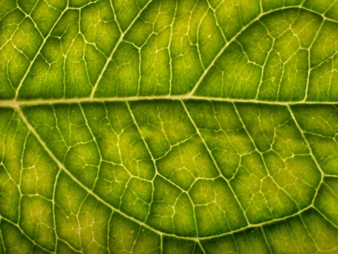 Backlit Leaf ISO 200, 30mm, f/18, 2 Seconds