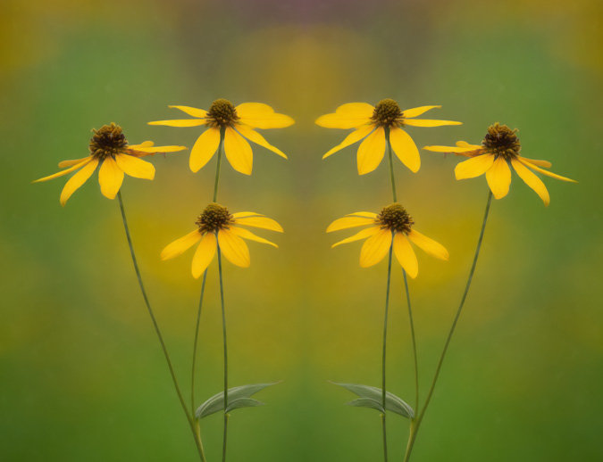 Soft Summer Flowers - Mirror Image