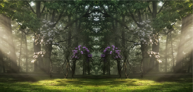 Morning Sun Rays on the Blooming Tree - Mirror Image
