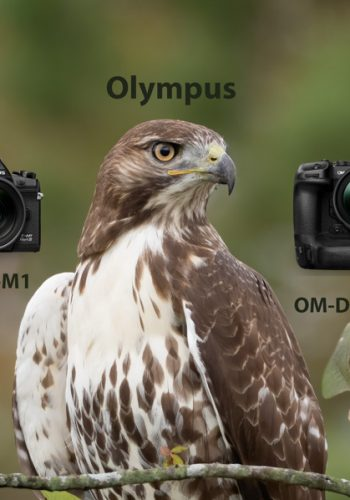 OM-D E-M1X vs OM-D E-M1 III for Bird Photography