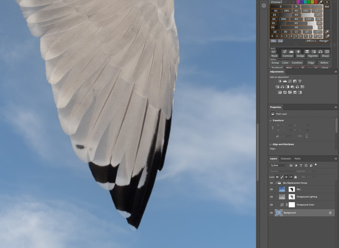 Seagull Sky Replacement Close Up - Photoshop