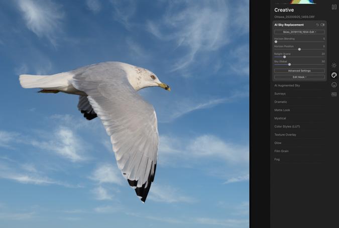 Seagull Sky Replacement - Luminar 4