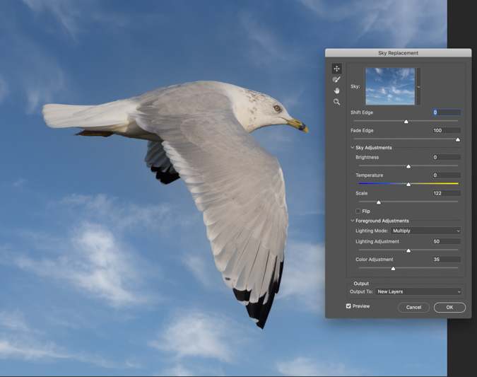 Seagull Sky Replacement - Photoshop