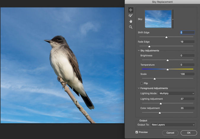 Eastern Kingbird Sky Replacement