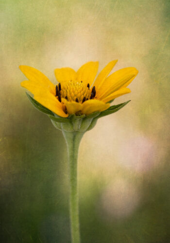 Yellow Flower with Texture