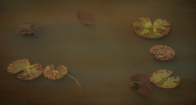 Lily Pads - Created with Hummingbird Wings Look and 2 Textures