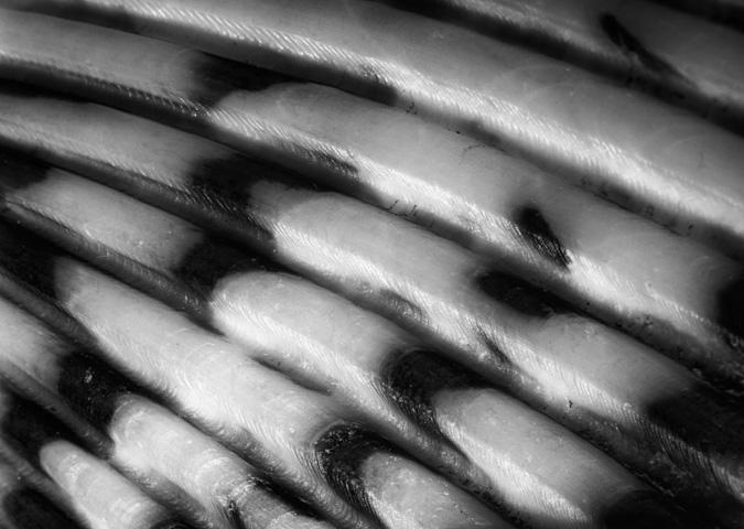Seashell, f/10, On Camera Flash