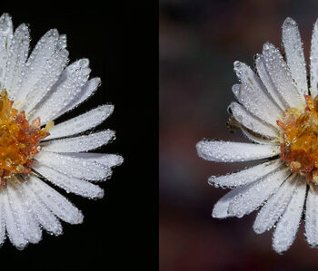 Flower Before and After Texture