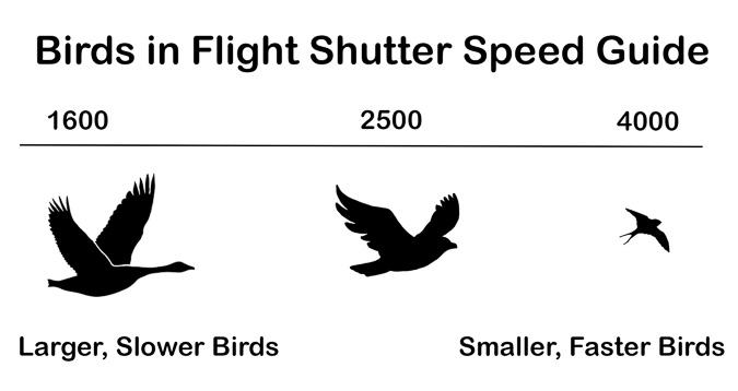 Birds in Flight Shutter Speed Guide
