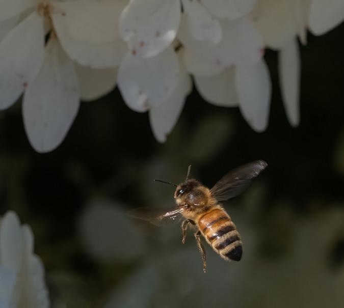 Bee f/10, ISO 1250, 1/2500